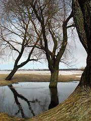 stromka_2.jpg
